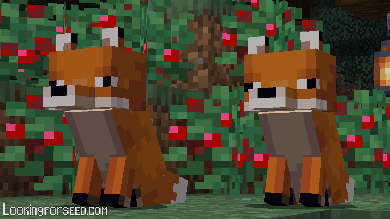 2 Foxes sitting
