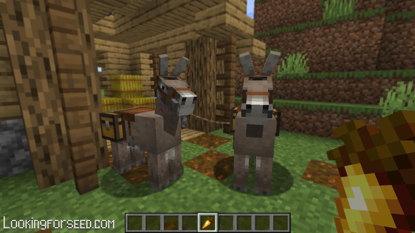 Breeding Donkeys with Golden Carrot