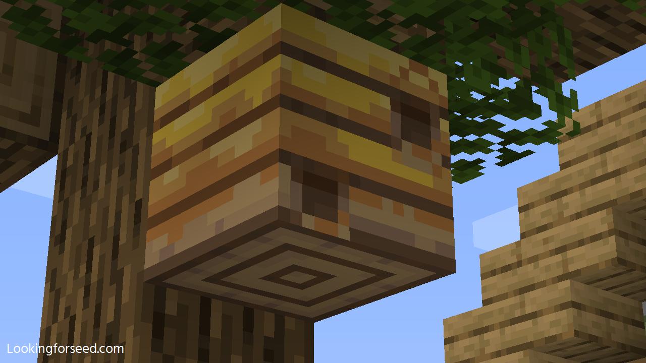 Bee Nest